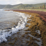 Government, Hotels, Environmental Groups Urged To Work Together To Combat Sargassum Seaweed